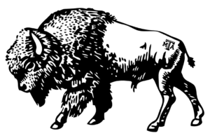 Drawing of a Bison