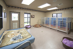Dog room new wing