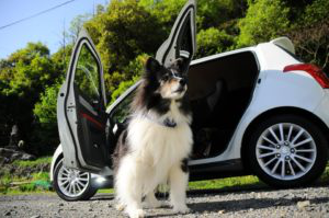 The Magnificent Dog Car